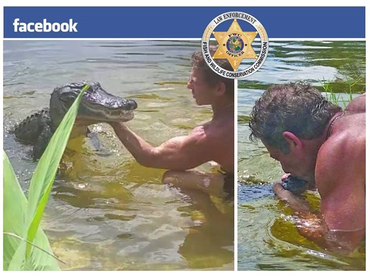 Has Fwc Been Lying To Us About Alligator Harassment Laws