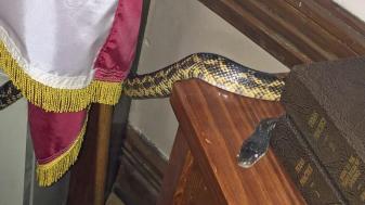 Gatesville-Courthouse-Snake